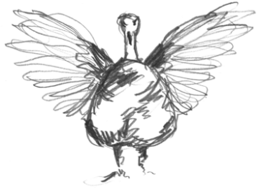 turkey illustration - facing